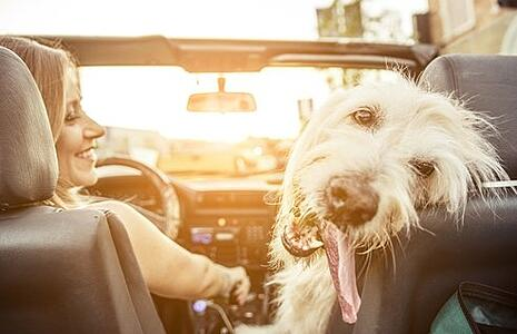 Tips for a Safe and Happy Road Trip with your Pet