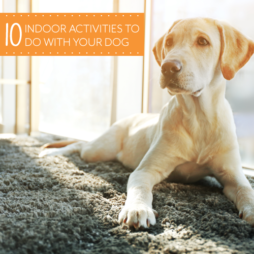 10-Indoor-Activities-For-Your-Dog_500X500PX.png