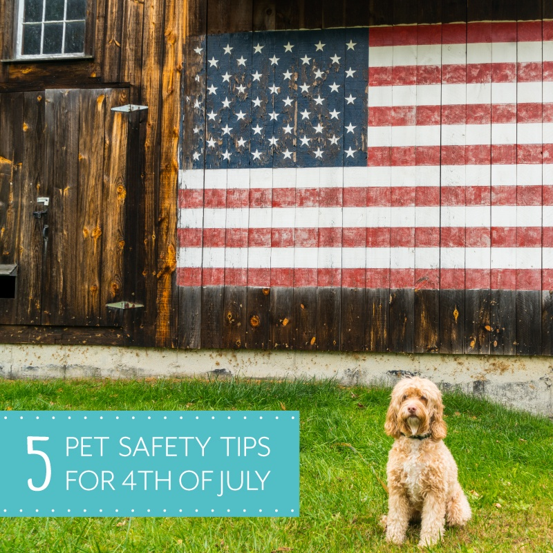 5 Pet Safety Tips For 4th of July