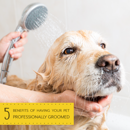 Benefits-of-Grooming_500X500-1.png