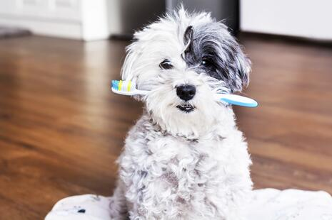 Dental Dog.jpg