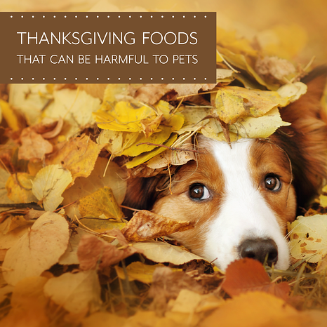 Thanksgiving-Foods-That-Are-Toxic-to-Pets-1.png