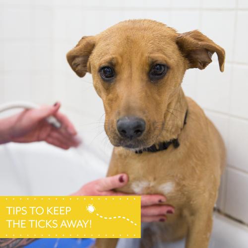 Tips-to-keep-the-ticks-away---Blog-Main-Image