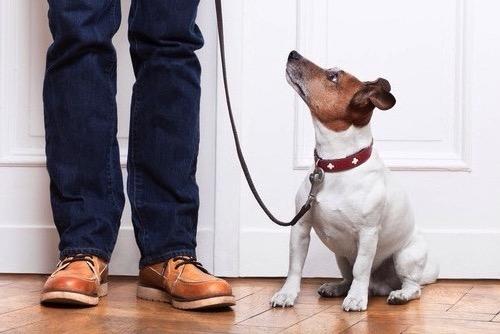 Watch Your Tone Dog Training Best Friends Sugar Land.jpeg