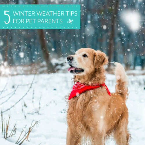 Winter_Safety_Tips_MainPhoto_500x500.png