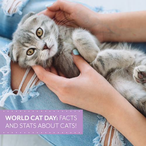 World-Cat-Day_500x500px.png