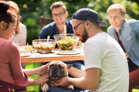 Dog and People At A Picnic or BBQ