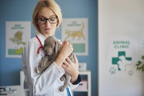 Small dog at the Veterinarian
