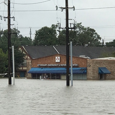 Animal Emergency Clinic North East (Humble) flooded from Hurricane Harvey.