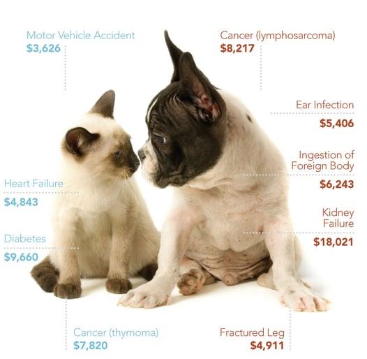 Best Friends Pet Care Pet Insurance