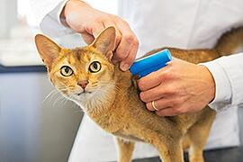 Microchipping Pets
