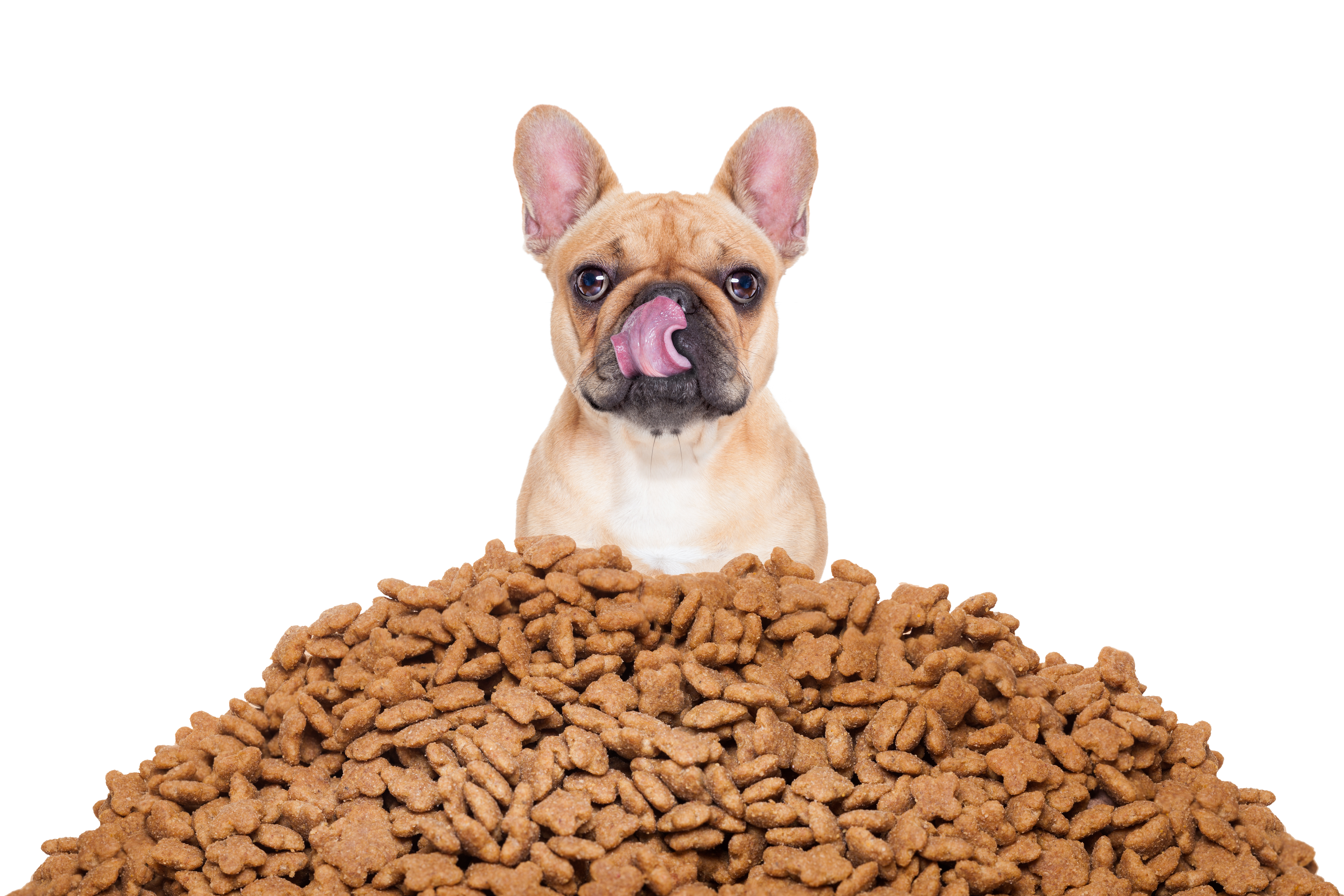 Dog with lots of dog food