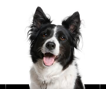 Best Friends Pet Care : The Dog Dish